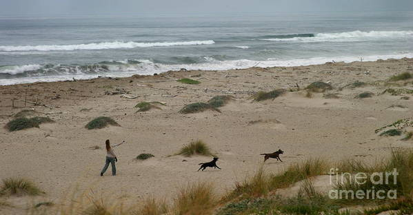 Sand Poster featuring the photograph Run My Dogs by Henrik Lehnerer