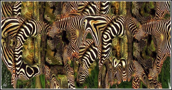 Zebra Poster featuring the photograph A Confusion Of Zebras by Wayne King