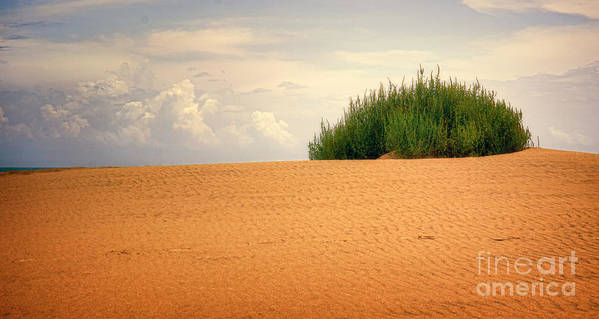 Alone Poster featuring the photograph Lone Beach Bush by Valerie Johnson