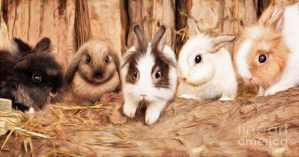 Easter Poster featuring the photograph 5 Little Rabbits by Silvio Schoisswohl