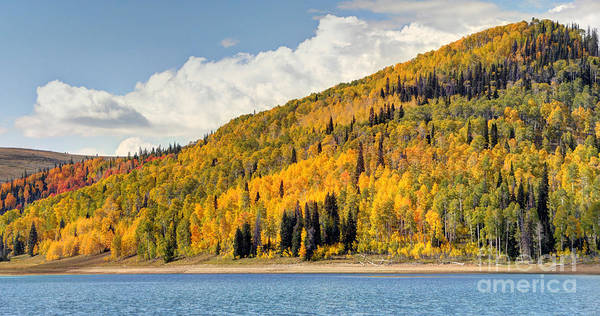 Autumn Poster featuring the photograph Autumn At Huntington Reservoir - Wasatch Plateau - Utah by Gary Whitton