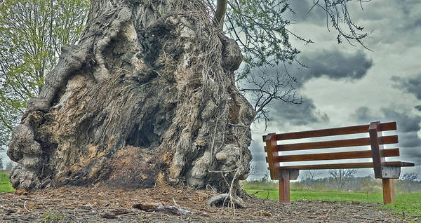 Bench And Tree Poster featuring the photograph Sleepy Hallow Awakens by Jeramie Curtice