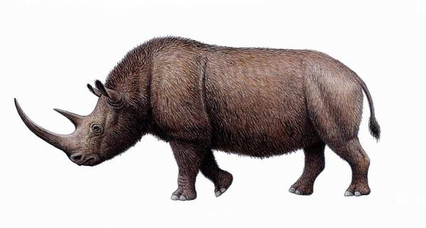 Coelodonta Antiquitatis Poster featuring the photograph Woolly Rhinoceros, Artwork by Mauricio Anton