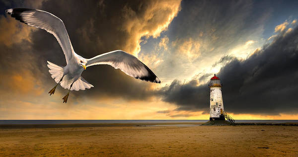 Gull Poster featuring the photograph Soaring Inshore by Meirion Matthias