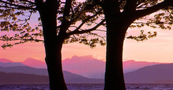 Landscape Poster featuring the photograph Through The Trees In Vancouver B.c 42 by Lyle Crump