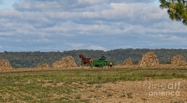 Amish Poster featuring the photograph Amish Man Boy Buggy by David Arment
