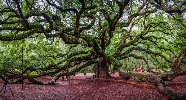 Angel Poster featuring the photograph Angel Oak by Jeff Ortakales