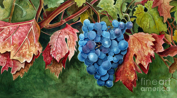 Grapes Poster featuring the painting Old Vine Zinfandel by Debbie Hart