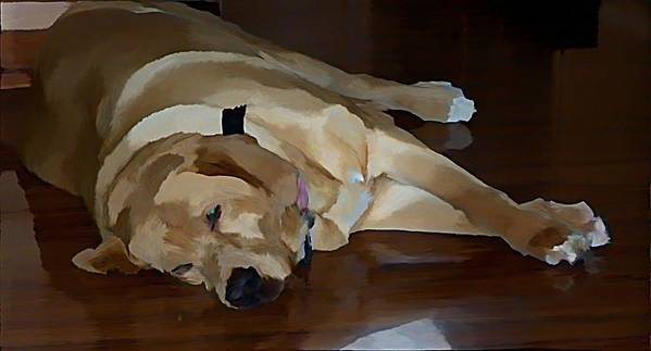 Dogs Poster featuring the photograph Sleeping Bandit by Stephanie Kendall