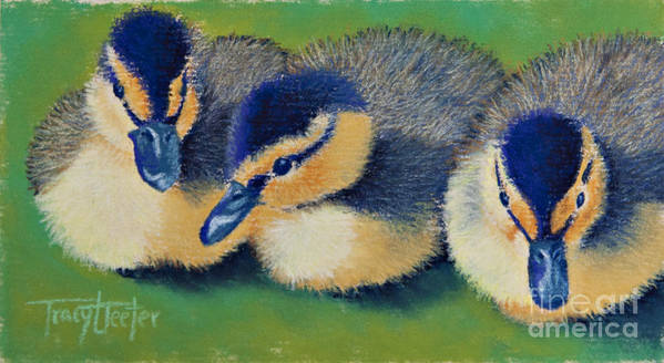 Duck Poster featuring the pastel Three Amigos by Tracy L Teeter