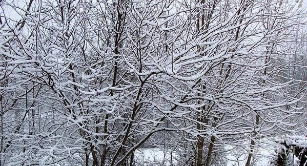Trees Poster featuring the photograph Winter Storm by David Neace