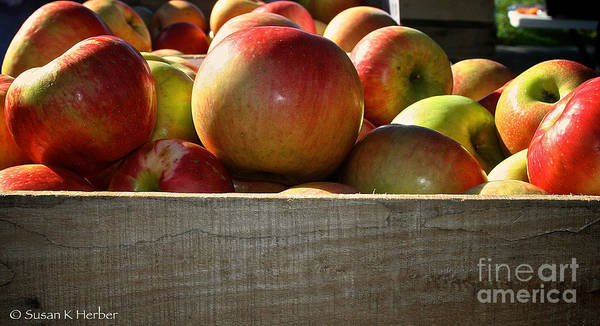 Outdoors Poster featuring the photograph Honey Crisp by Susan Herber
