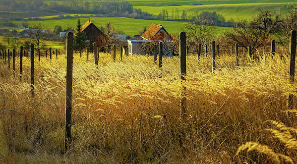 Fields Of Gold Poster featuring the photograph Hillside In Fall Jalaksova, Slovakia by Kurt Meredith