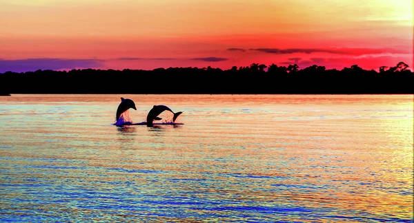 Dolphins Poster featuring the photograph Joy Of The Dance by Karen Wiles