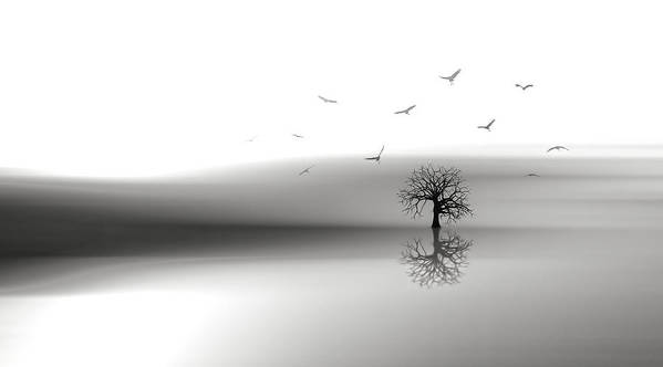 Solo Tree Poster featuring the photograph Solo Tree by Nasser Osman