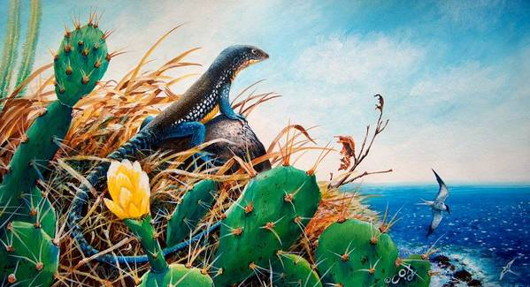 Chris Cox Poster featuring the painting St. Lucia Whiptail by Christopher Cox