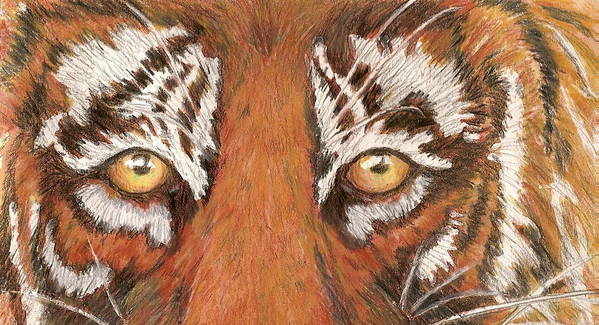 Tiger Poster featuring the painting Tiger Eyes 2 by Patricia R Moore