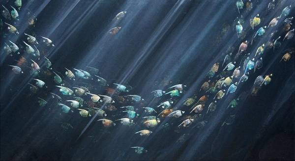 Fish Poster featuring the painting Turning Point by Ana Bikic