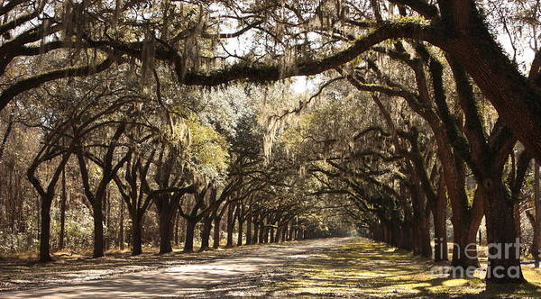 Live Oaks Poster featuring the photograph Warm Southern Hospitality by Carol Groenen