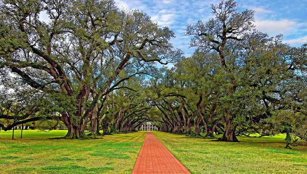 Oak Alley Plantation Poster featuring the photograph Oak Alley 3 by Steve Harrington