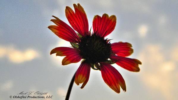 Flower Poster featuring the photograph Alone Flower I Mlo by Mark Olshefski