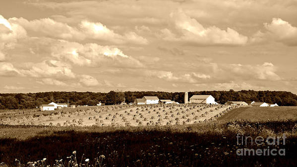 Ohio Amish Farm Print Poster featuring the photograph Amish Farm by Lila Fisher-Wenzel