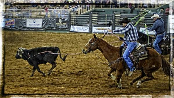 Calf Roping Poster featuring the photograph Caught Calf by Alice Gipson