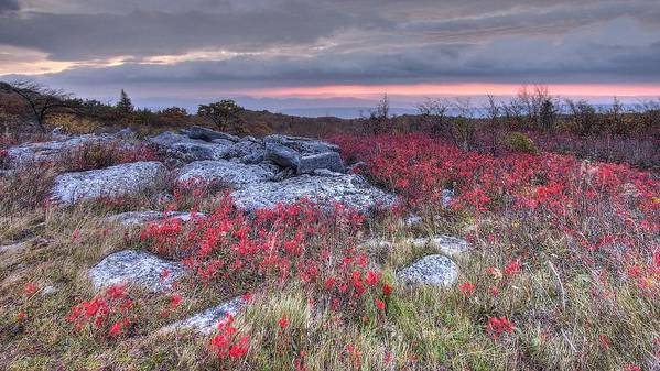 Dolly Sod Wv West Virginia Landscape Hdr Sunrise Clouds Red Wild Flowers Poster featuring the photograph Dolly Sod Field by Stephen Lilly