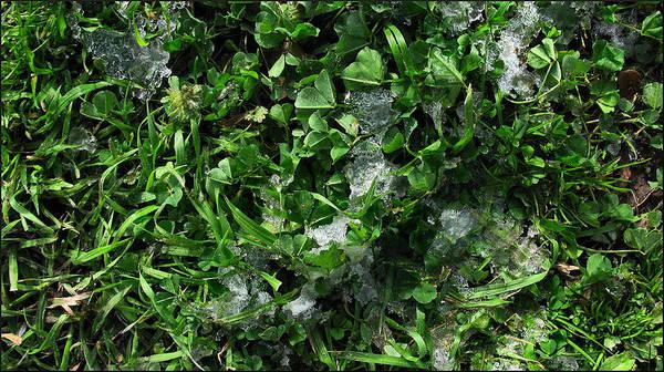 Grass Poster featuring the photograph Grassnowcomp 2009 by Glenn Bautista