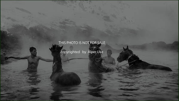 Horses Poster featuring the photograph Hot Natural Spa Time by Alper Uke
