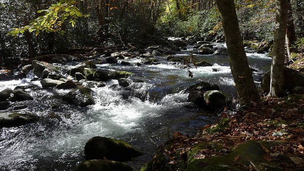 River Poster featuring the photograph Little Pigeon River - Great Smoky Mountains by Pamela McCown