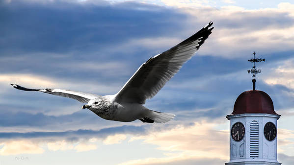 Seagull Poster featuring the photograph Seagull And Clock Tower by Bob Orsillo
