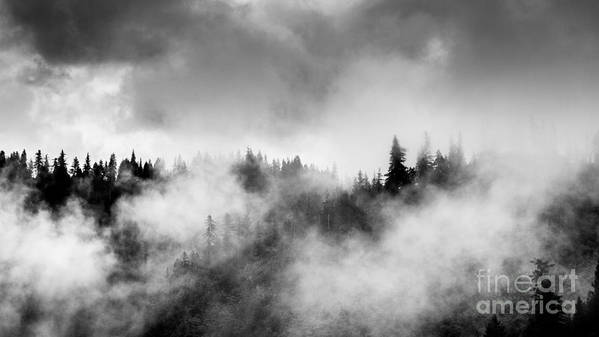 Forest Poster featuring the photograph Trees In Fog by Tim Tolok