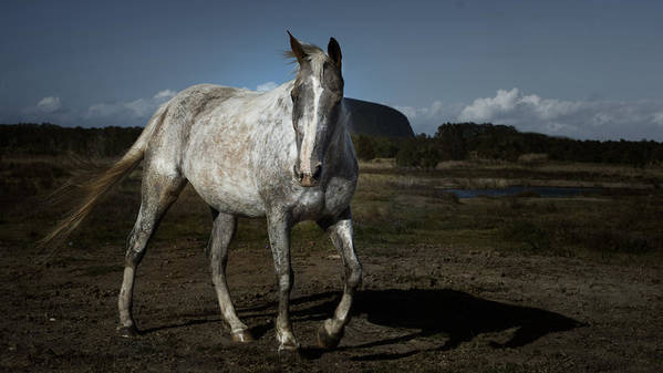 Horse Poster featuring the photograph Willow by Debra Simms