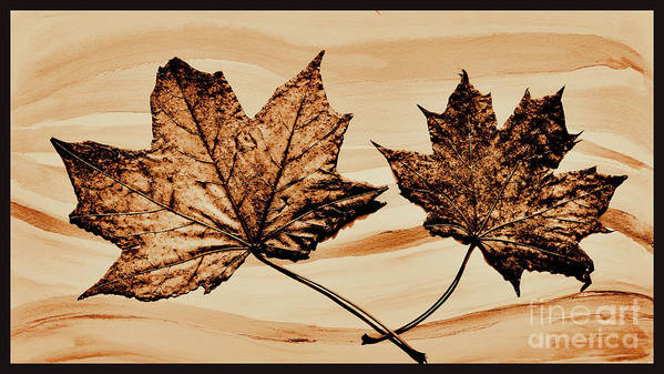 Photo Poster featuring the photograph Canadian Leaf by Marsha Heiken