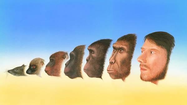 Purgatorius Poster featuring the photograph Human Evolution, Artwork by Richard Bizley
