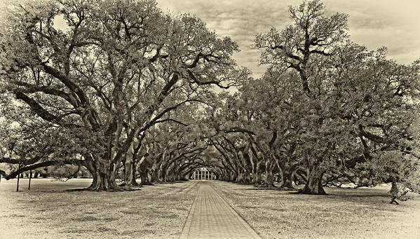 Oak Alley Plantation Poster featuring the photograph Oak Alley 3 Antique Sepia by Steve Harrington