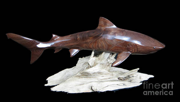 Tiger Shark Poster featuring the sculpture Tiger Shark by Kjell Vistnes