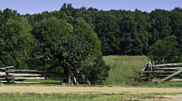 Appomattox Poster featuring the photograph Trumpet Vine And Fence At Appomattox Courthouse Virginia by Teresa Mucha