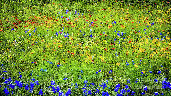 Wildflowers Poster featuring the photograph Wildflowers In Bloom by D Davila