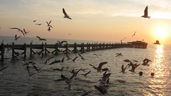 Sunset Poster featuring the photograph Feeding Time by Colleen DalCanton