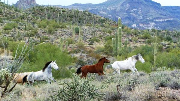 Horses Poster featuring the photograph Going For A Run by Lisa Spero