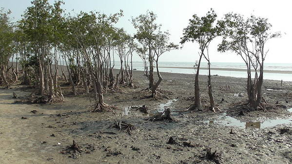 Mangroves Poster featuring the photograph Mangroves by Tanmoy Bhattacharjee