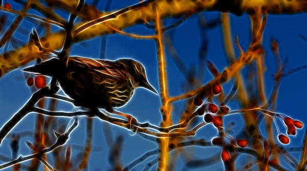 Reifel Poster featuring the photograph Starling In Winter Garb - Fractal by Lawrence Christopher