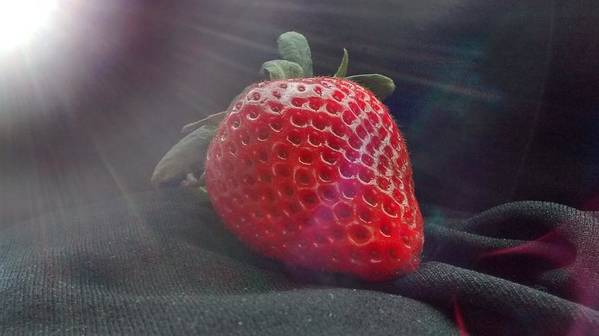 Strawberry Poster featuring the photograph Strawberries Raise by Sylvester Wofford
