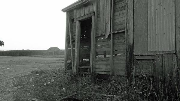 Louisiana Poster featuring the photograph Sugar Cane Shack by Leigh Ann Raab