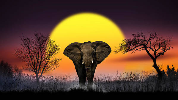 Elephant Poster featuring the photograph The Elephant by Nasser Osman