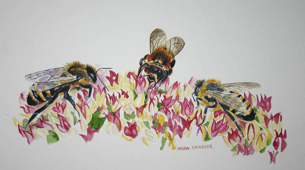 Bees Poster featuring the painting Three Beez by Helen Shideler
