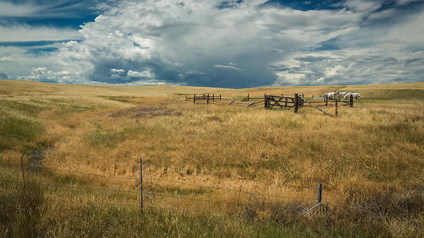 Storm Clouds Poster featuring the photograph Three White Horses And Corral by Rick Strobaugh