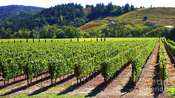 Vineyards Poster featuring the photograph Vineyards In Sonoma County by Charlene Mitchell
